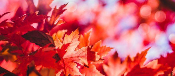 we-landscape-herfstkleuren