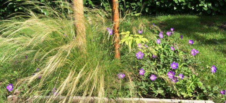 Kleine tuinmetamorfose