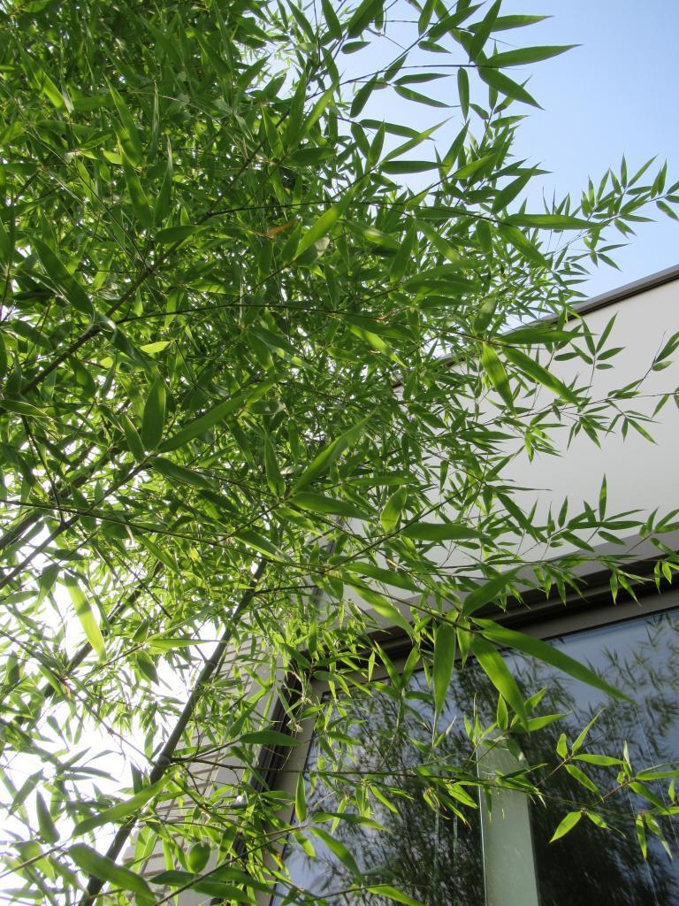 gefilterd licht door bamboe