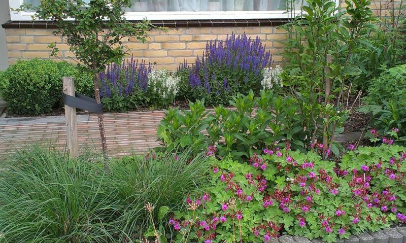 Salvia blauhugel