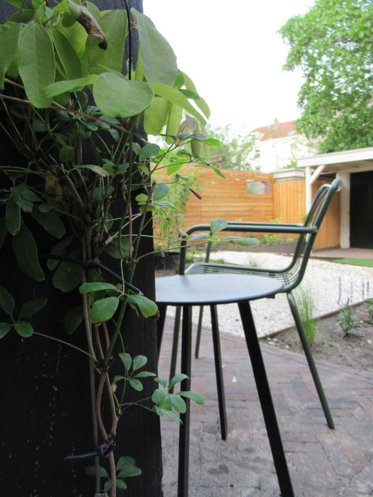 Klimplanten tegen de pergola