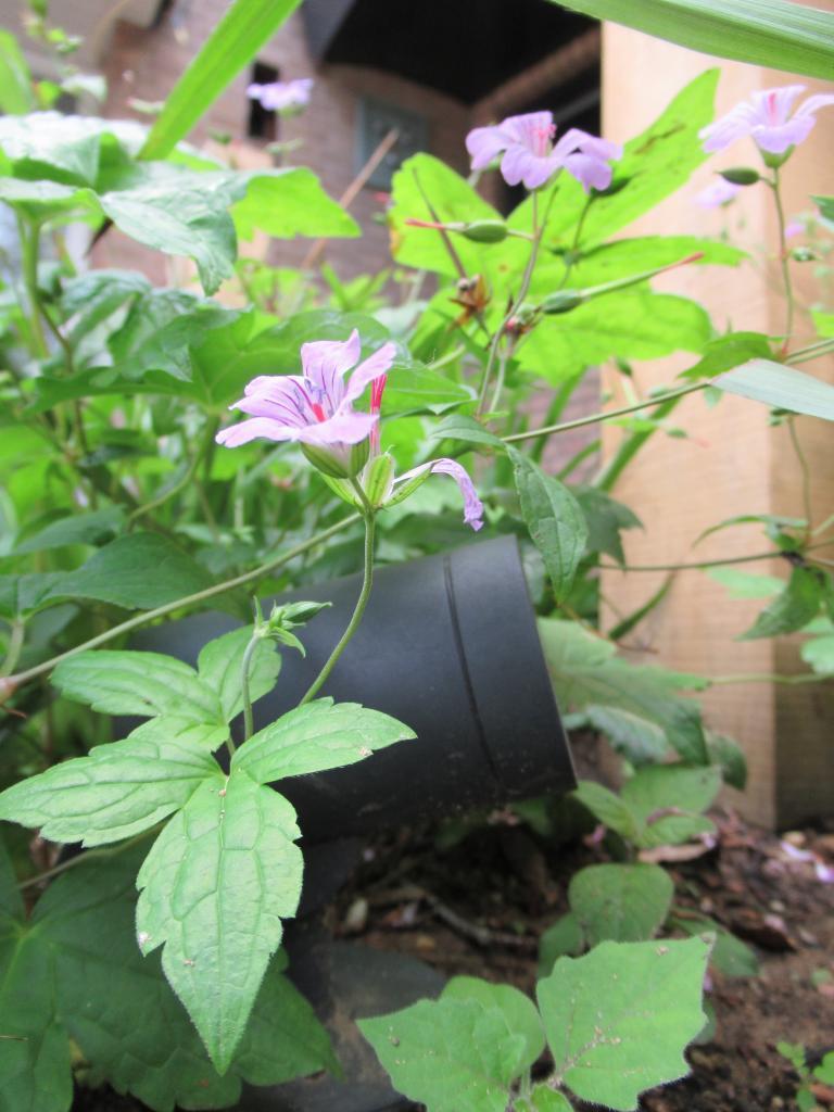 Tuinverlichting tussen beplanting