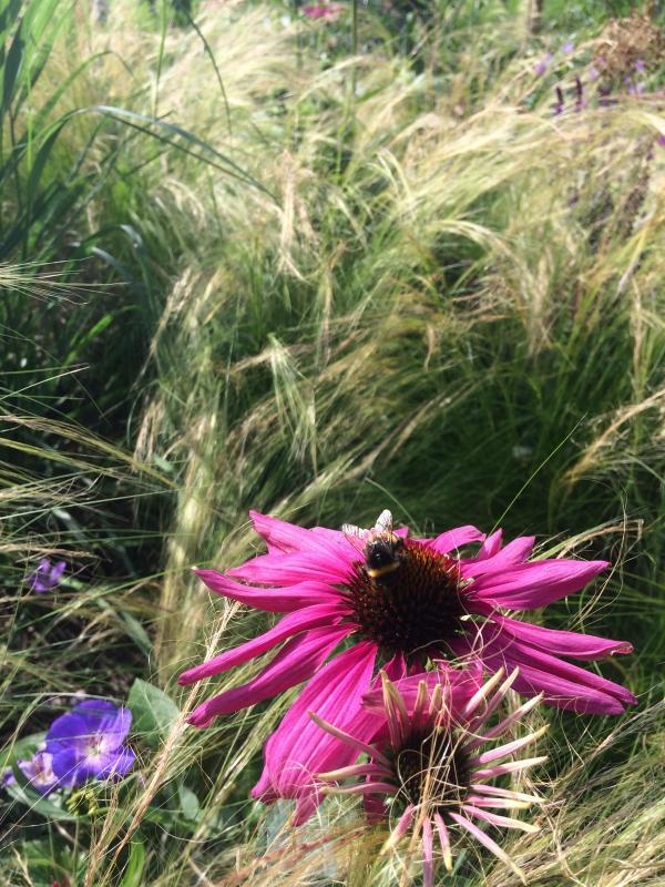 Ook de bijen en hommels zijn gek op deze border