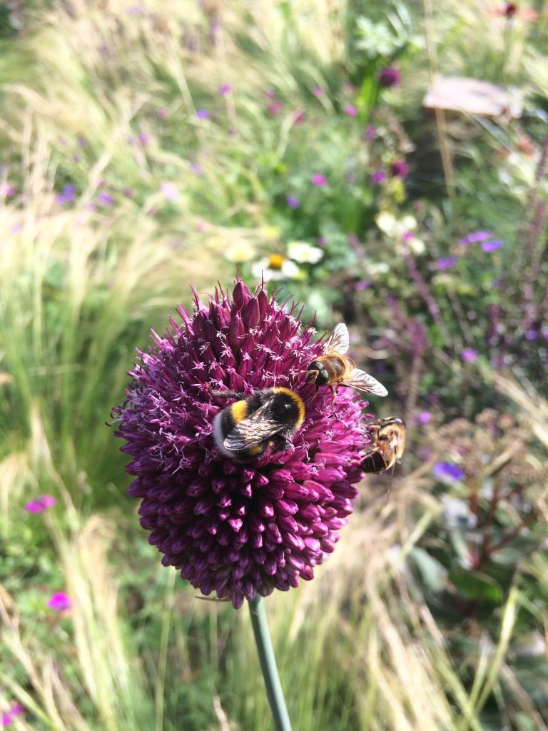 Goed voor de bijen