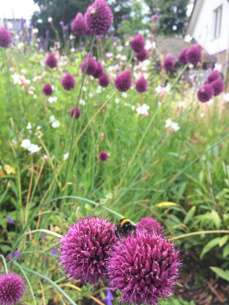 Bijen zijn er dol op
