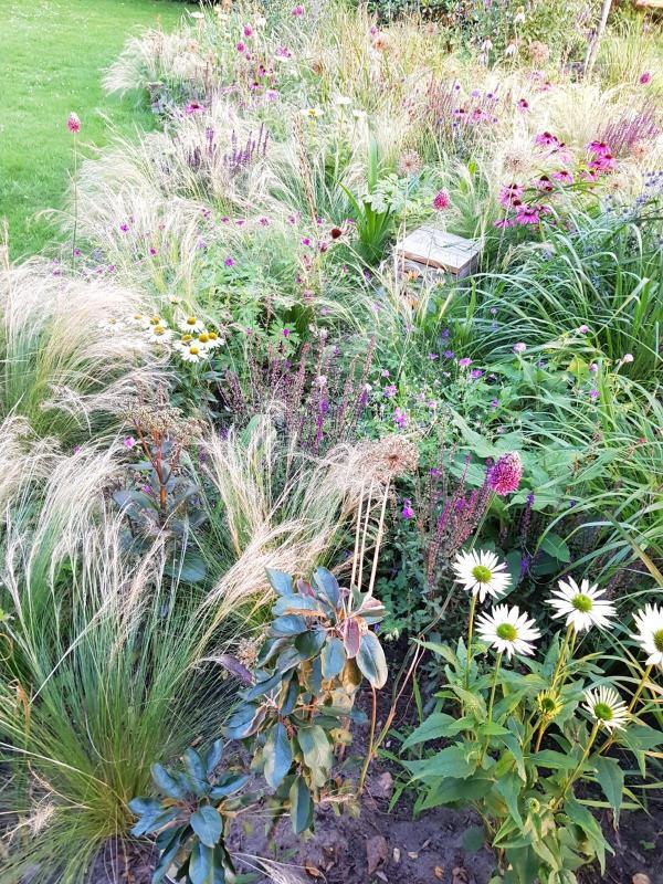 Weelderige prairieborder met siergrassen en bloeiende vaste planten