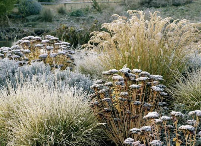 kleur-in-de-wintertuin-siergras
