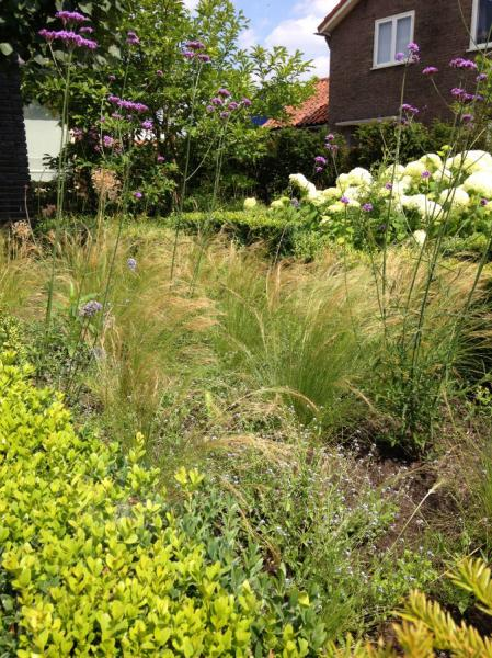 siergrassen-zomer-Epse-We-Landscape