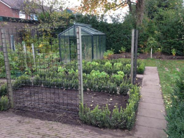 Tuinrenovatie buxusvakken