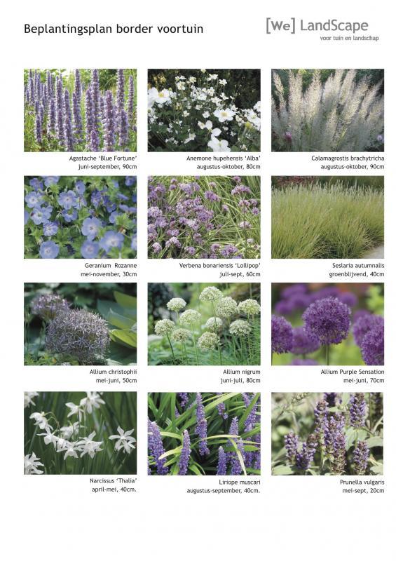 Super Beplantingsplan border Gorssel, We Landscape tuinrenovatie en ontwerp GP-63